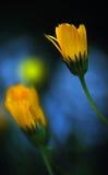 blommafjäder Royaltyfria Bilder
