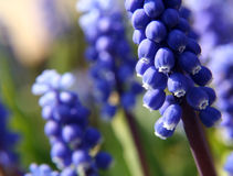 blommafjäder Fotografering för Bildbyråer