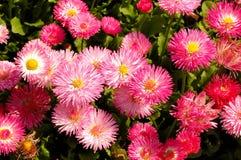 blommafjäder arkivfoto
