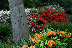 blommafjäder Arkivfoton