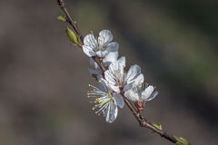 1 blommafjäder Arkivbild