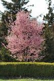 blommafjädertrees Royaltyfri Fotografi