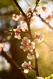 blommafjäderwhite arkivbilder