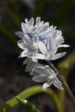 blommafjäderwhite Royaltyfri Fotografi