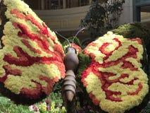 Blommafjäril Arkivbilder