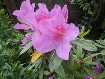 BlommaFlorida stad royaltyfri fotografi