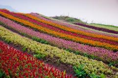 Blommaformerna parkerar in Arkivfoto