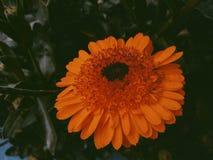 Blommafotografi royaltyfria foton