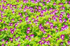 Blommafotografinärbild royaltyfri bild