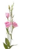 blommafragment Arkivfoto