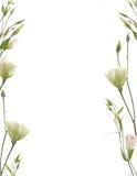 blommafragmentgräns Arkivfoton
