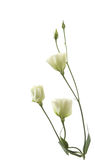 blommafragmentgräns Royaltyfri Fotografi