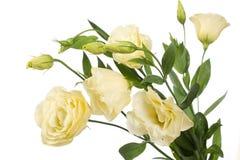 blommafragmentgräns Royaltyfri Bild