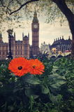 Blommaframdel av Big Ben Royaltyfria Foton