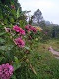 Blommagåva Royaltyfria Bilder