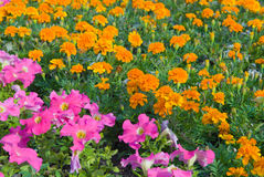 blommagarden Fotografering för Bildbyråer