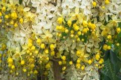 Blommagardin arkivbilder