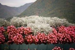 Blommagarnering Royaltyfri Bild