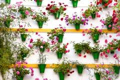 Blommagarnering av väggen - gammal europeisk stad, Cordoba, Spa Royaltyfria Foton