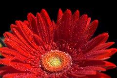blommagerberred Arkivbild