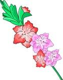 Blommagladiolusfilial Royaltyfri Bild