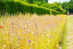 Blommagräns på Lacey Polesden, Surrey Arkivfoton