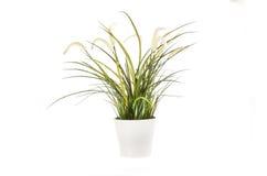 Blommagräs i kruka Fotografering för Bildbyråer