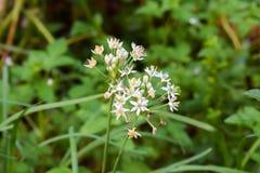 Blommagräs i trädgård Royaltyfri Foto