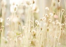Blommagräs på kopplar av tid royaltyfri foto