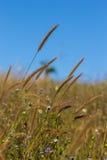 Blommagräset på vind i fält Arkivbild