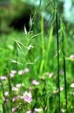blommagräsgreen Arkivbilder
