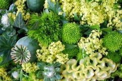 blommagreen Royaltyfri Bild