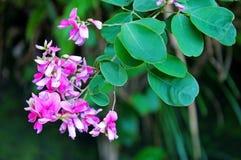 blommagreen låter vara den rosa fjädern Arkivbilder