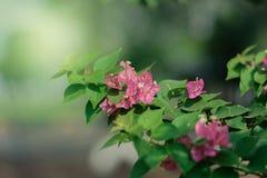blommagreen låter vara den rosa fjädern Royaltyfri Bild