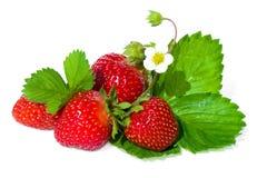 blommagreen låter vara jordgubbewhite Arkivfoto