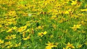 blommagreen låter vara yellow Royaltyfri Fotografi