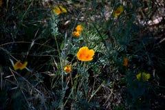 blommagreen låter vara yellow Royaltyfria Foton