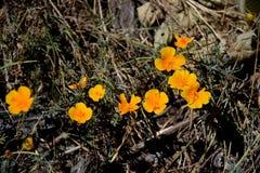 blommagreen låter vara yellow Royaltyfria Bilder
