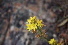 blommagreen låter vara yellow Royaltyfri Foto