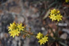 blommagreen låter vara yellow Arkivfoton