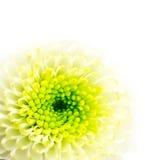 blommagreenwhite Arkivbild