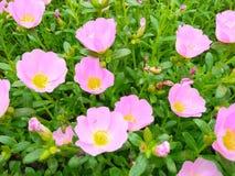 Blommaguling Fotografering för Bildbyråer