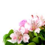 blommahälsning Arkivbilder