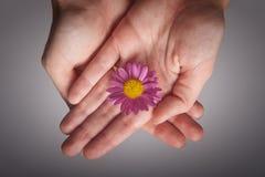 blommahänder Royaltyfri Foto