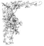 Blommahörn royaltyfri illustrationer