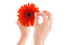 blommahand Royaltyfri Bild
