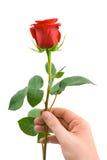 blommahand Royaltyfri Fotografi
