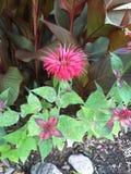 Blommahatten växer väl i Ontario Royaltyfri Fotografi