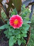 Blommahatten växer väl i Ontario Arkivfoton