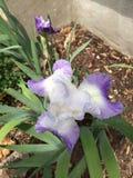 Blommahatten växer väl i Ontario Arkivbilder